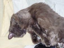 Hermes' sleepy face