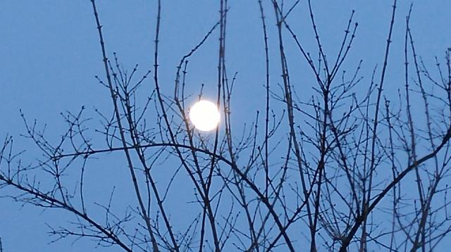 Nearly Full Moon over my back yard