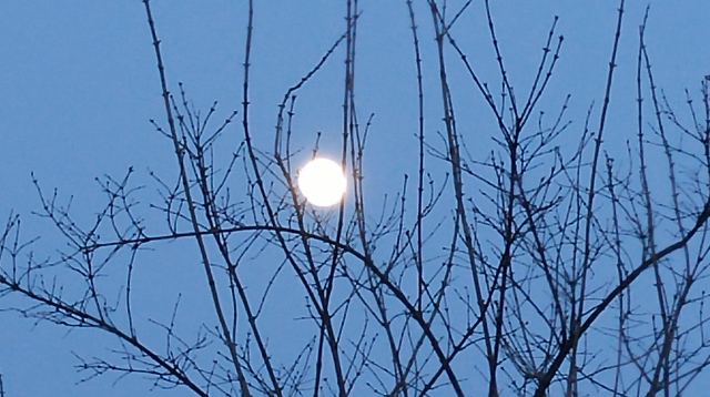Nearly Full Moon over my back yard