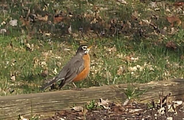 Robin 2017